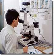 薄片作成、顕微鏡観察