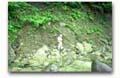 地質コンサルタント